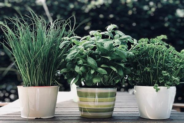 Jaké bylinky můžeme využívat v kuchyni při vaření a pečení