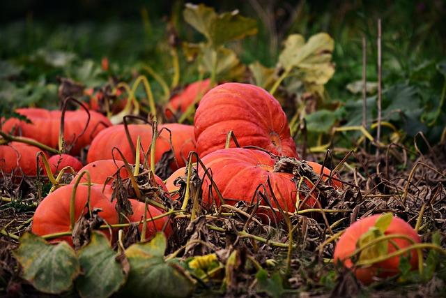 Jak využít dýně a dýňová semínka?