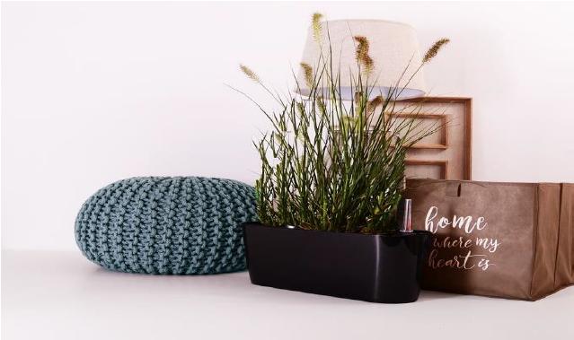 Pokojovými rostlinami ke klidu a vyrovnanosti